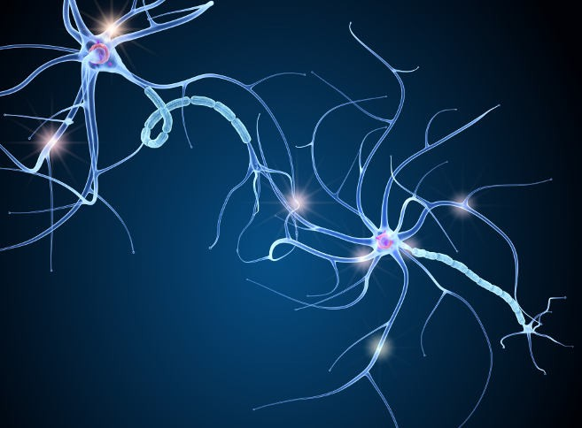 Neuronal connections